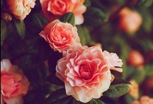 Flower power / by Martina Paletti