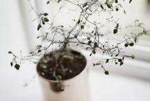 [ Indoors Garden ] / { to bring nature inside }