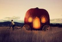 Pumpkin love / by Polly Andry