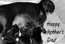 Holidays / Pet related holiday posts