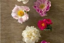 BLOOMS / by Jenny Rogers