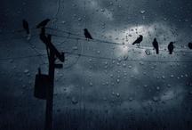 Storms, Rain, Weather