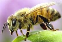 Bees & Bee Things