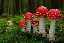 Toadstools, Mushrooms, & Other Fungi