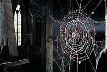 Spider Web Everything