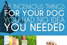 Ingenious Things For My Dog / Ingenious Things For My Dog