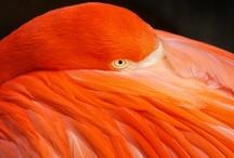 Orange / by Melissa Magid