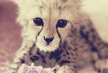 cutiess ;)