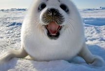 Cute / Things that make me smile