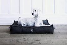 CLOUD 7 HAPPY CLIENTS / Sweet Dogs from all over the World enjoying their new Cloud 7 Beds