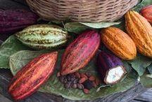 Grenada Chocolate / #Grenada #GND #PureGrenada #PureParadise #SpiceIsland @GrenadaBnB #GrenadaBnBLife #Paradise #TikiTime #SeaTurtles #Surf #Scuba #Snorkel #Sail #WaterFalls #Hike #Bike #Rainforest #Beaches #Mango #Coconut #Rum #Chocolate #Cocoa #RumPunch #Caribbean #Travel #Beaches