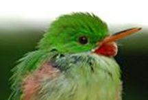 Grenada Birdwatching / #Grenada #GND #PureGrenada #PureParadise #SpiceIsland @GrenadaBnB #GrenadaBnBLife #Paradise #TikiTime #SeaTurtles #Surf #Scuba #Snorkel #Sail #WaterFalls #Hike #Bike #Rainforest #Beaches #Mango #Coconut #Rum #RumPunch #Caribbean #Travel #Beaches #Dining #Liming      #BelongAnywhere  #DontGoThereLIVEthere