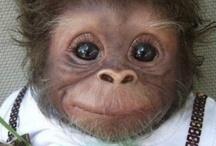So cute! / by Cindy Key