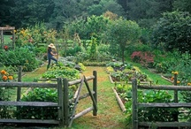 Garden and Outdoor Ideas / by Jen Tevis