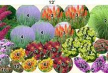 5 - Garden: Design / Design