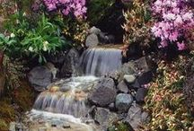 5 - Gardening: Water Feature + Plants / Common Name: Plant Type: Zones: Light: Height: Spread: Habit: Soil: pH: Moisture: Bloom Time: Bloom Size: Foliage Size: Companion Plants: