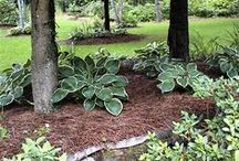 5 - Gardening: Shade / Common Name: Plant Type: Zones: Light: Height: Spread: Habit: Soil: pH: Moisture: Bloom Time: Bloom Size: Foliage Size: Companion Plants: