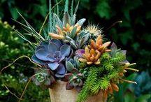 5 - Gardening: Succulents / Common Name: Plant Type: Zones: Light: Height: Spread: Habit: Soil: pH: Moisture: Bloom Time: Bloom Size: Foliage Size: Companion Plants: