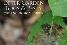 5 - Gardening: Troubleshooting; Diagnosis, Weeds, or Pests / Rx for Your Plants