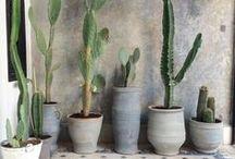 Garden / Cacti and indoor garden inspiration.