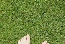 5 - Gardening: Lawn / Lawn Care