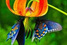 Wondrous World / I didn't know there were so many stunningly  beautiful natural wonders until Pinterest!  / by Diana Designs