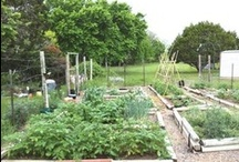 Hill Country Kitchen Garden / My garden journal: vegetables I grow in my kitchen garden in the Texas Hill Country. Veggie photos from online seed catalogs.