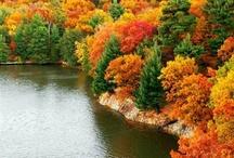 Fall-ing  / by Allison Brockman