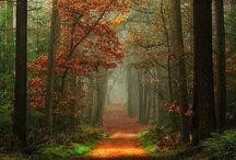 God's Beautiful Creation / by Chelsea Jenkin