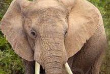 Nature info/Zoology