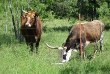 Writing a Life on a Texas Homestead 2015 / Daily notes about my life as a writer, gardener, chicken fancier, lover of nature and the wide wild world. For longer, occasional posts, visit my blog http://www.susanalbert.typepad.com/lifescapes