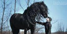 HORSES-KELPIES...MAGICAL