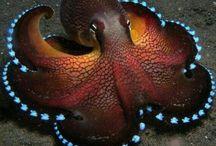 Octopus...and? Beware the Kraken