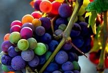Colors / by Lynn C