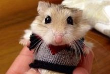 Anthropomorphism / Animals acting like humans, dressing like humans, making your heart melt.  / by Yes and Yes Blog