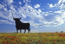Iberia- The Bull & The Cock ☼ / España & Portugal