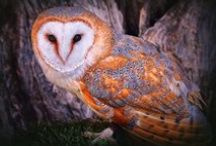 Amazing Owls in Art and Life / by Sheila Ridgway