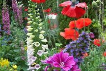 Stunning Flowers for the Garden