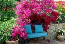 Flowering. / by Mariana Ferez
