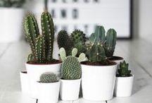 Pflanzen - plants / Zimmerpflanzen und Sukkulenten für zuhause.