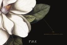 Book Design Love