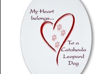 I'm a Catahoula mom / aka Louisana Catahoula Leopard Dog. This board is for our catahoula, Harley. It takes a dedicated person to have a houla. They need plenty of excercise, they can run like a greyhound. The reward is that they are people dogs, you belong to him/her and you get affection galore!  / by ✿*゚゚・✿.。*   brenda *.。✿*゚゚・✿