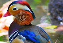 Beautiful Birds / by ✿*゚゚・✿.。*   brenda *.。✿*゚゚・✿