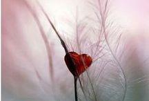 array of hearts / ❤¸¸.•*¨* ❤ / by ✿*゚゚・✿.。*   brenda *.。✿*゚゚・✿
