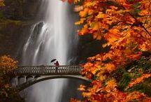 autumn's in the air  / by ✿*゚゚・✿.。*   brenda *.。✿*゚゚・✿