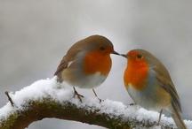 Animals and Birds / by Judith Bridges