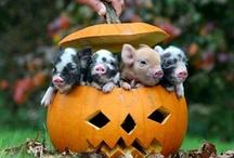 Animals-Farm friends / by Debby Elmer
