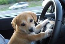 Fords and our Furry Friends / Who likes to go for a ride in your Ford more than your dog?!