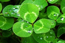~*Kiss me... I'm IRISH!*~ / Really I am Irish, Dutch, English and German, But most of all American!