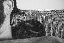 Wittle animals <3 / by Alyssa Barnes <3